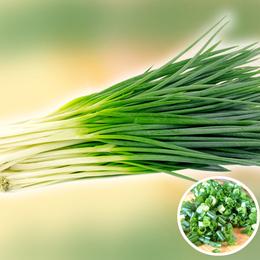 四季分葱种子小香葱种子四季播阳台盆栽细葱籽大田种葱籽小葱种子