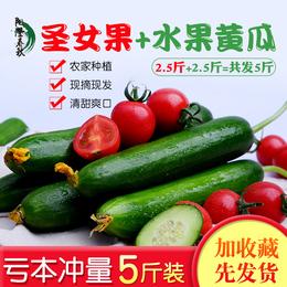 新鲜小西红柿番茄圣女果水果小黄瓜5斤混装农家蔬菜特价批发包邮