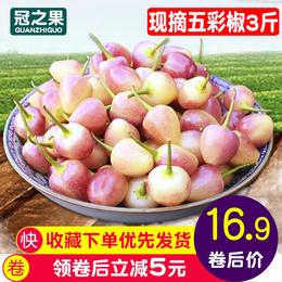 现货 广西新鲜现摘 七彩椒 五色椒 珍珠五彩椒 圆椒笼椒酱油泡椒