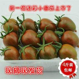 农巴老千禧圣女果小番茄紫黑色迷彩西红柿新鲜蔬菜水果4斤装包邮