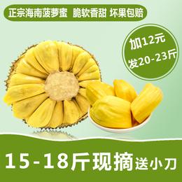 海南菠萝蜜 干苞木大树菠萝 假榴莲  新鲜水果 波罗密15-18斤包邮