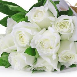 【屋檐的春天】切花玫瑰系列盆栽月季花苗 阳台花园植物 花卉绿植