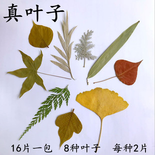 天然真树叶标本 幼儿园手工制作树叶贴画 儿童diy干树叶手工材料