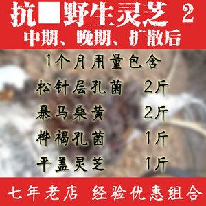 野生灵芝四件套2晚期 桑黄平盖灵芝桦褐孔菌松针层孔菌林芝灵芝野生