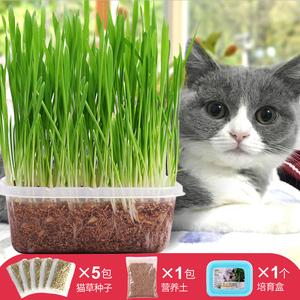 猫草种子薄荷粉猫零食猫咪去毛球猫草天然大麦种植套装猫咪用品