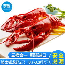 只海鲜冷冻野生大龙虾 2只装 0.8斤 买鲜进口熟冻波士顿龙虾 约0.7