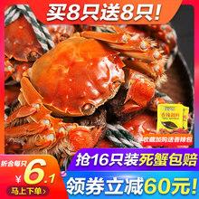 抢16只 鲜活螃蟹现货大闸蟹公蟹公母蟹随机大小河蟹礼盒装