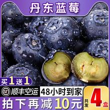 顺丰当季现摘现发新鲜孕妇水果国产蓝莓 丹东蓝莓鲜果大果500g盒装