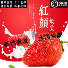 丹东九九草莓东港马家岗秸秆99草莓孕妇水果牛奶红颜草莓三斤包邮