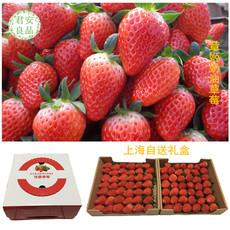 上海新鲜草莓 有机章姬奶油草莓 3.5斤/盒 新鲜水果 晨采现摘现送
