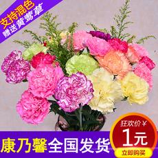 康乃馨鲜花单头家庭插花礼物云南百合玫瑰多色鲜切花花束速递到家