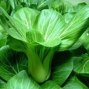 小油菜上海青蔬菜种子 阳台种菜 盆栽庭院 四季播菜种籽 包邮