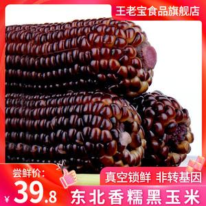 【王老宝】东北真空粗粮黑玉米苞米10棒