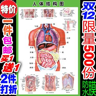 人体骨骼内脏示意图_内脏_热门标签_白菜优选
