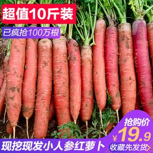 农家沙地<span class=H>水果</span>胡萝卜生吃新鲜红心脆甜沙窝即食红萝卜蔬菜带泥10斤
