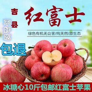 山西当季<span class=H>苹果</span>冰糖心新鲜水果现摘10斤包邮野生红富士丑萍果胜烟台