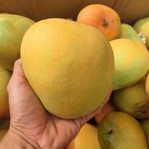大果6斤装海南芒果澳洲红黄皮澳芒香甜新鲜水果三亚热带水果