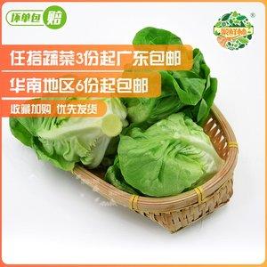 聚鲜林新鲜蔬菜奶油生菜半结球牛油菜250g西餐沙拉菜素食拌菜食材