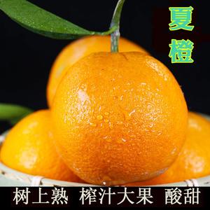 夏<span class=H>橙</span>新鲜 10斤榨汁水果宜昌秭归当季时令<span class=H>橙</span>子酸甜树上熟大果包邮