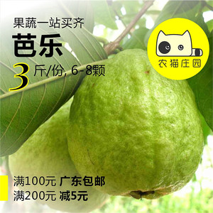 【农猫庄园】芭乐 3斤  番<span class=H>石榴</span> 深圳新鲜水果 沙拉素食果茶
