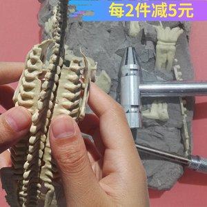 恐龙化石骨架模型 考古挖掘玩具 儿童益智挖宝手工DIY拼装套装