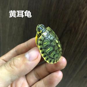 黄耳龟苗活体小乌龟活体深水龟观赏龟<span class=H>宠物</span>巴西龟全品