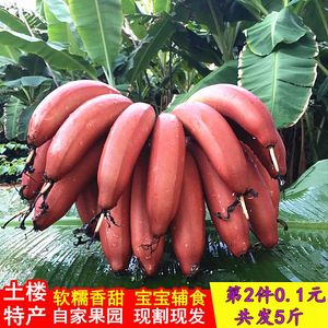 福建土楼红皮香蕉美人蕉红香蕉香甜软糯红香蕉新鲜<span class=H>水果</span>2.5斤包邮