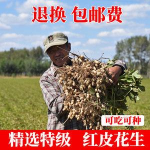 小孟紅皮花生花生帶殼米農家生新曬干花生種籽子特大高產5斤散裝