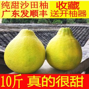 现货【纯甜沙田柚】10斤新鲜水果包邮 梅州金<span class=H>柚子</span>冰糖正宗非容县